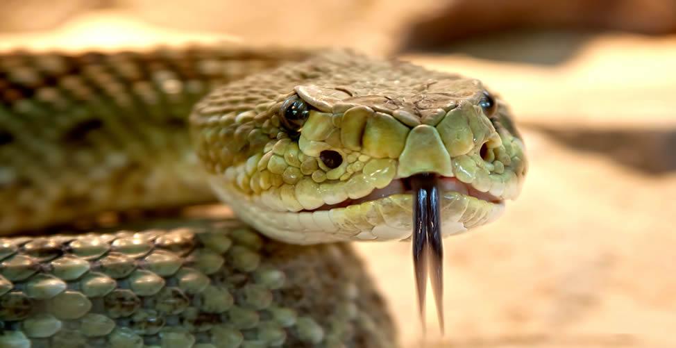 Sonhar Com Cobra Atacando