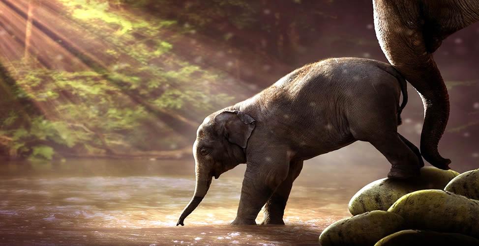 Sonhar Com Elefante Bebendo Água