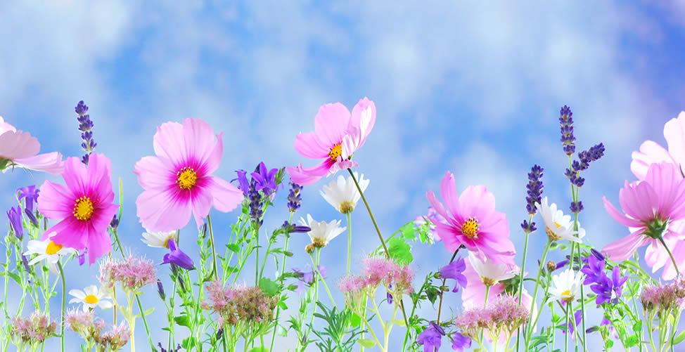 Significado de Sonhar Flores