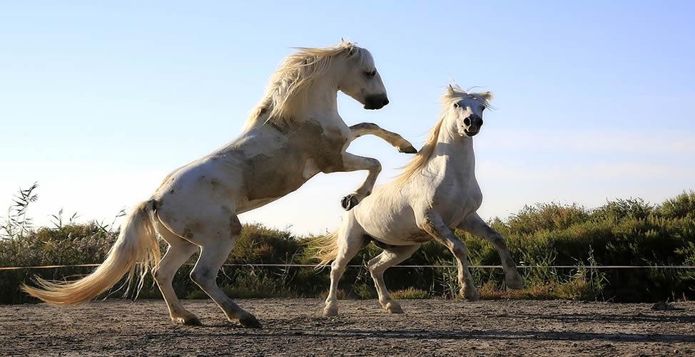 Entenda o Significado de Sonhar Com Cavalo