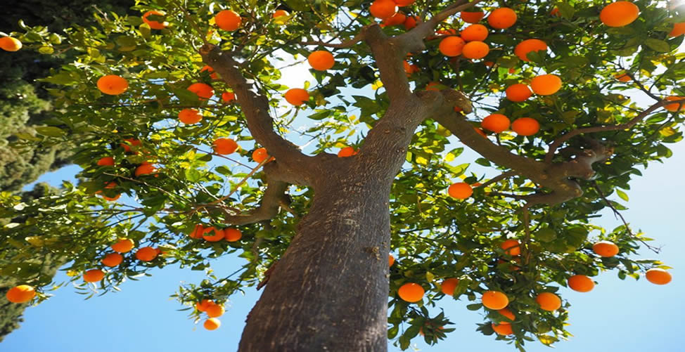 Sonhar Com Árvore