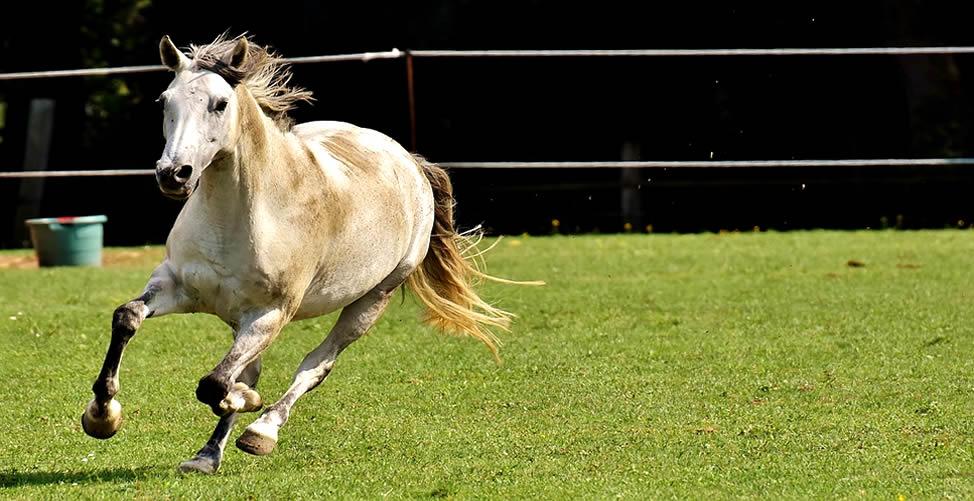 Sonhar Com Cavalo de Outra pessoa