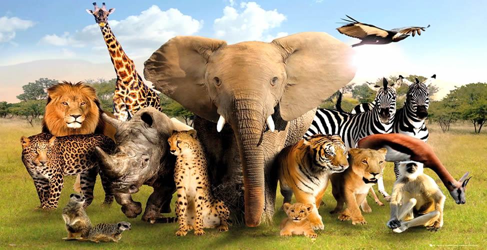 Sonhar Com Animais Selvagens