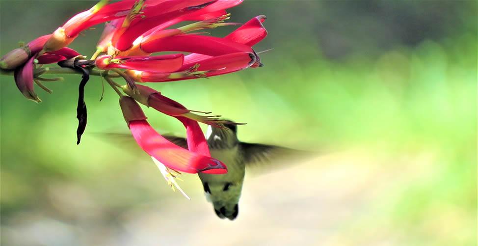 Sonhar Com Beija Flor Sugando Néctar