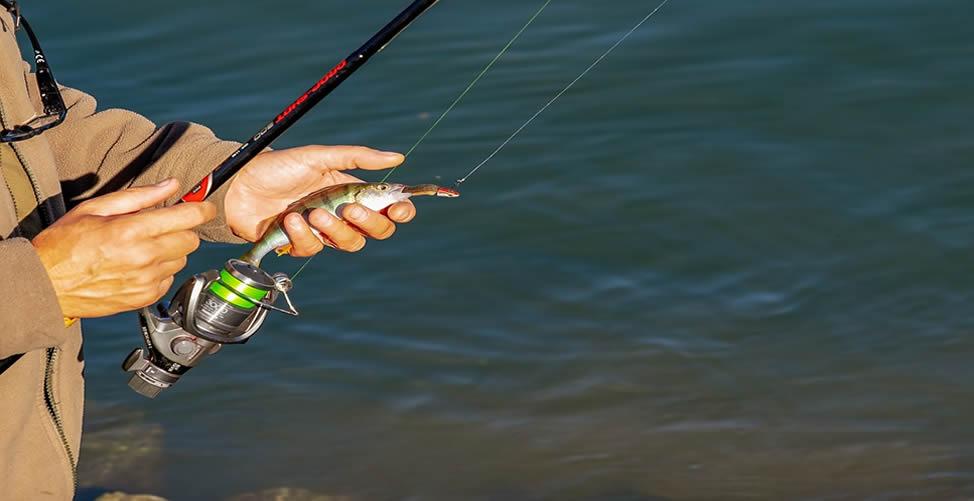 Sonhar com Pesca de peixe pequen