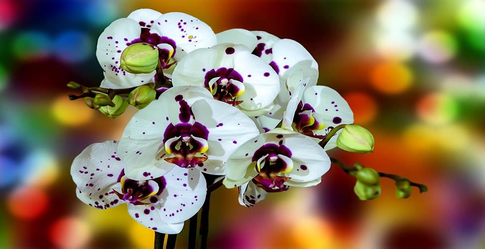 Sonhar Com Orquídea