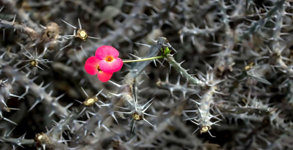 Sonhar Com Espinho de Flor