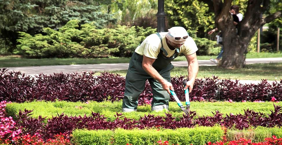 Significado de Sonhar Com Jardineiro