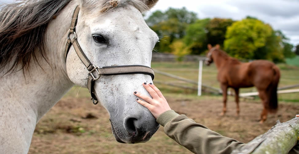 Sonhar Com Cavalo Dócil