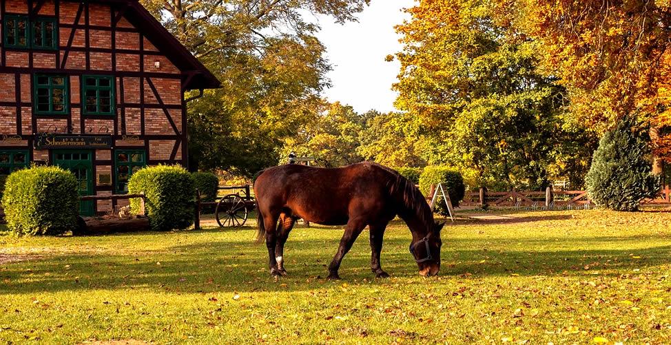 Sonhar Com Cavalo Pastando