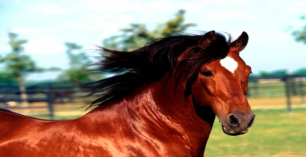 Sonhar Com Cavalo Vermelho