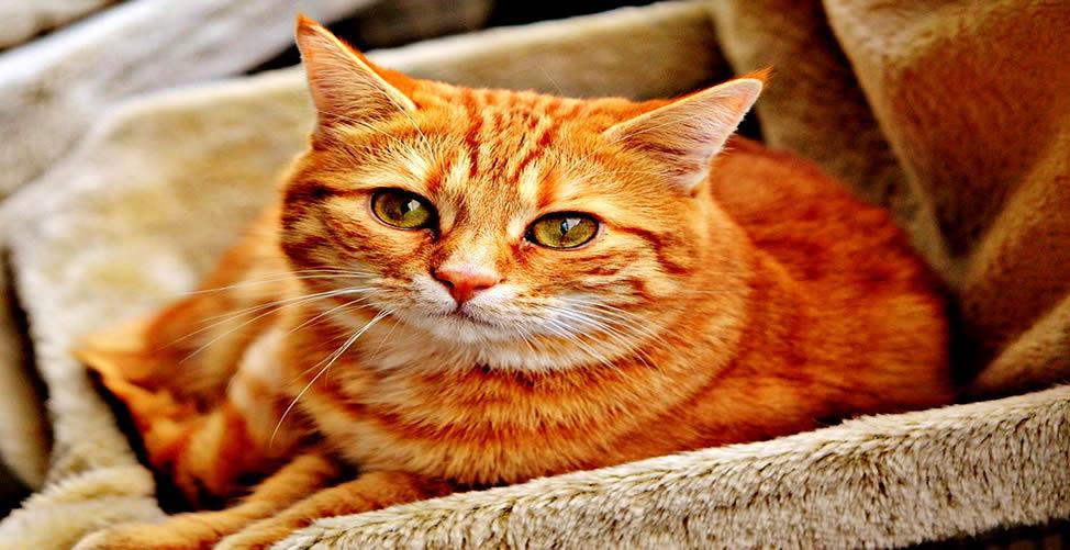 Sonhar Com Gato te Olhando
