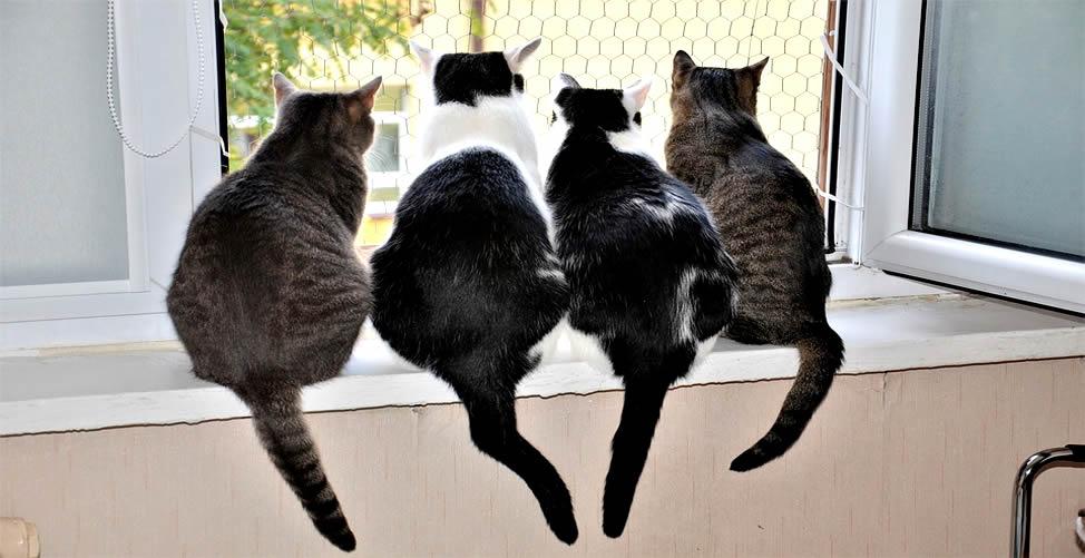 Sonhar Com Gato em Quantidade