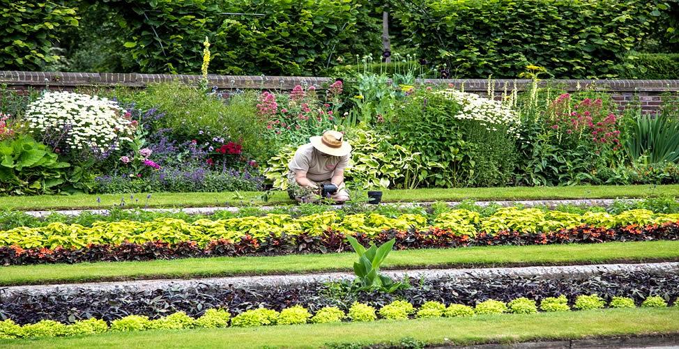 Sonhar Com Jardineiro Cuidadoso