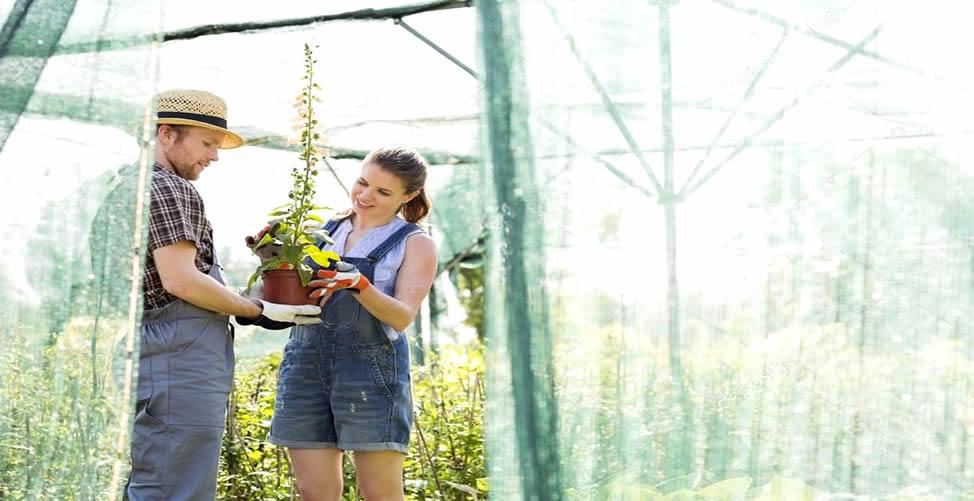 Sonhar Com Jardineiro - Discute