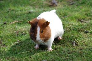 Sonhar-Com-Hamster