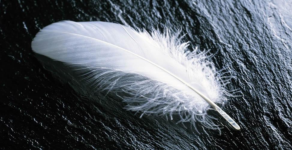 Sonhar Com Pena Branca