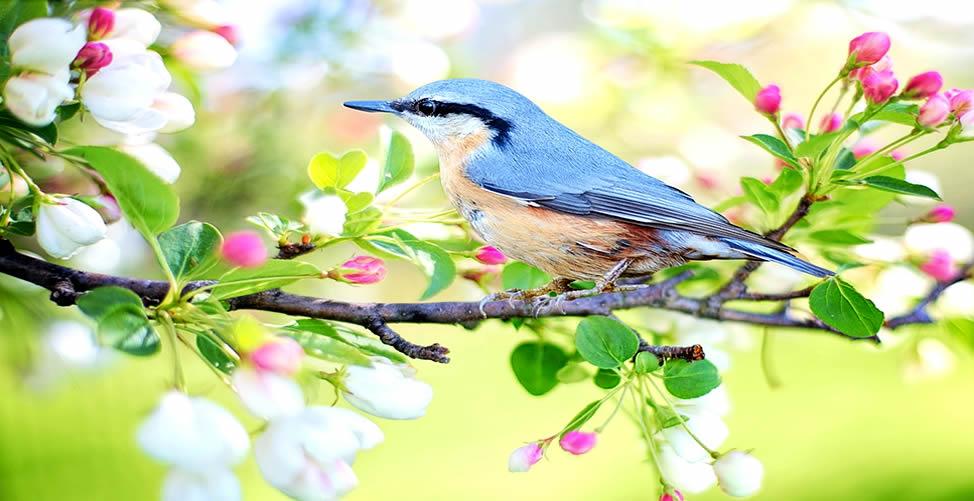 Significado de Sonhar Com Pássaro