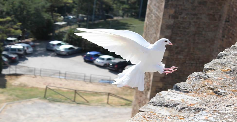 Sonhar Com Pássaro Branco