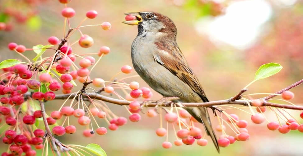 Sonhar Com Semente - Pássaro comendo
