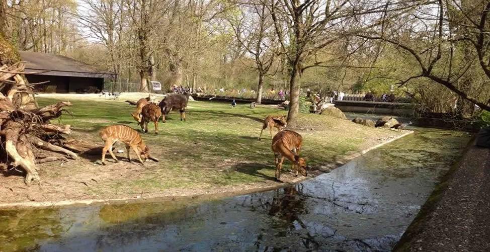 Sonhar Com Zoológico e Animais Calmos
