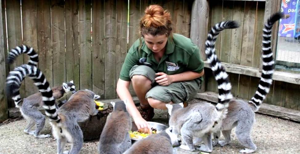 Sonhar Com Zoológico e que Trbalha Nele