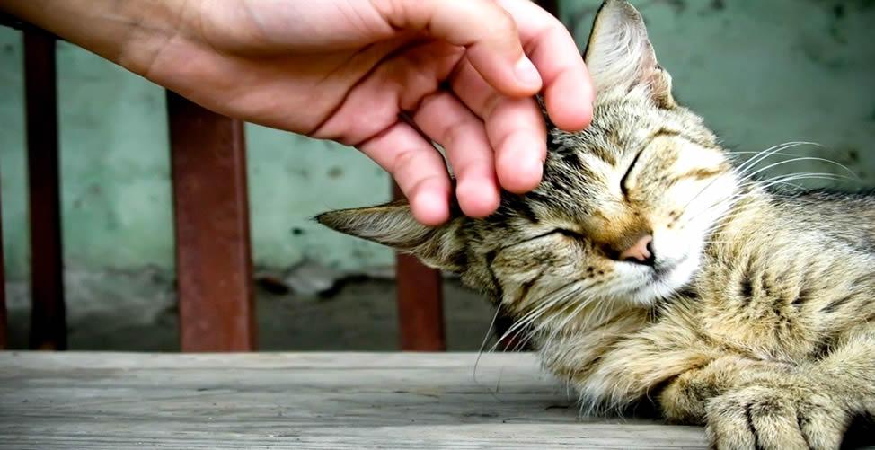 Sonhar Com Carinho - Gato
