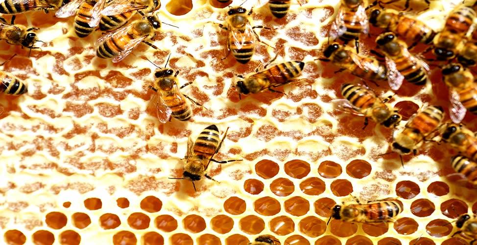 Sonhar Com Colmeia Repleta de mel