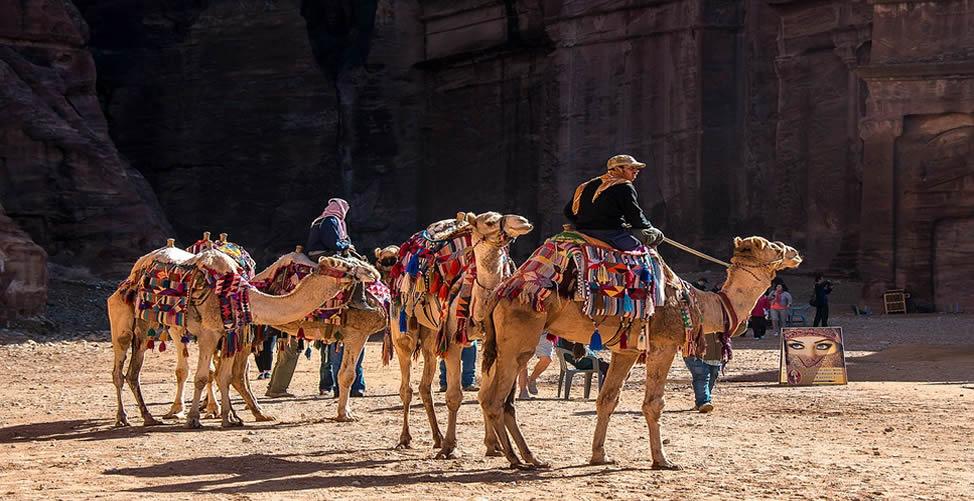 Sonhar Com Camelo e Anda Nele