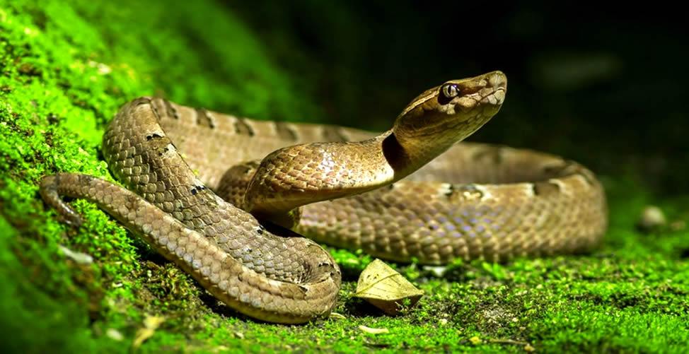 Significado De Sonhar Com Serpente