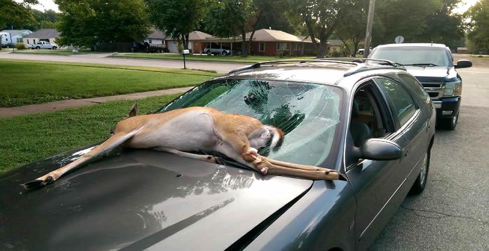 Sonhar Com Atropelamento de Animal