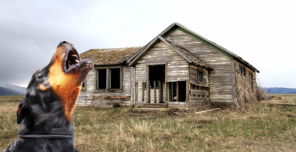 Sonhar Com Cachorro Preto Uivando