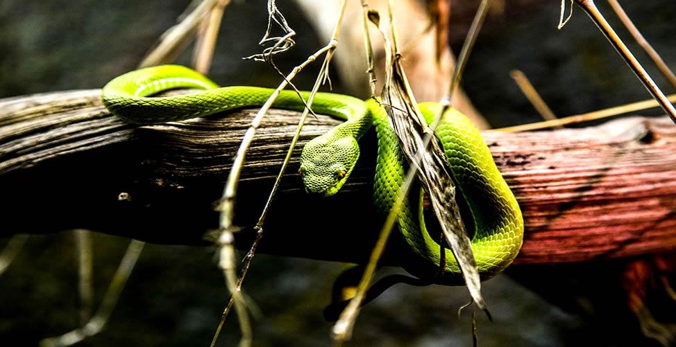 Sonhar Com Cobra Verde Fugindo