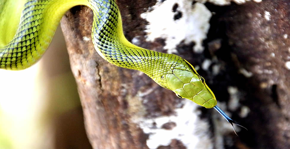 Sonhar Com Cobra Verde Picando