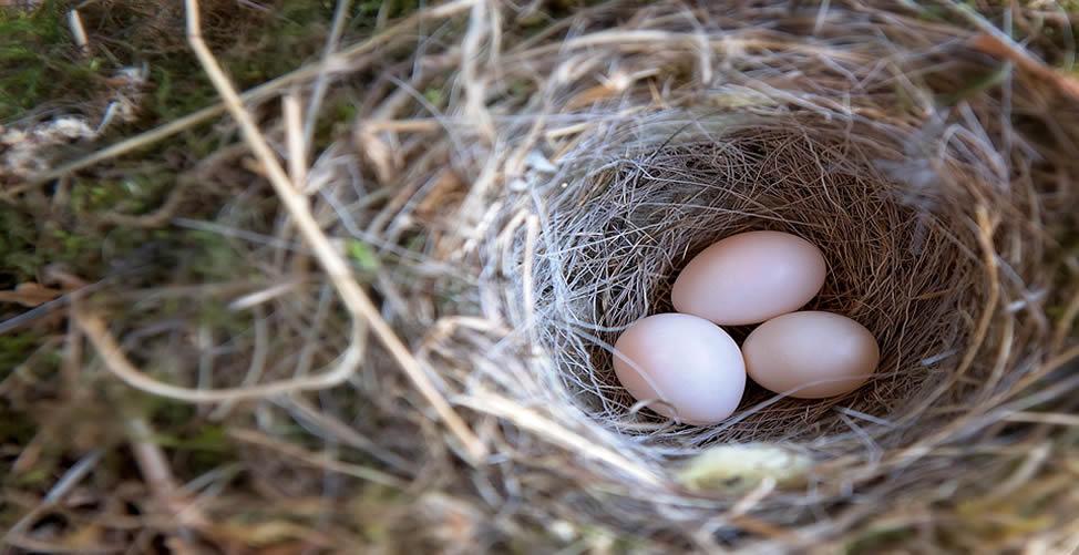 Sonhar Com Ninho de Ovos