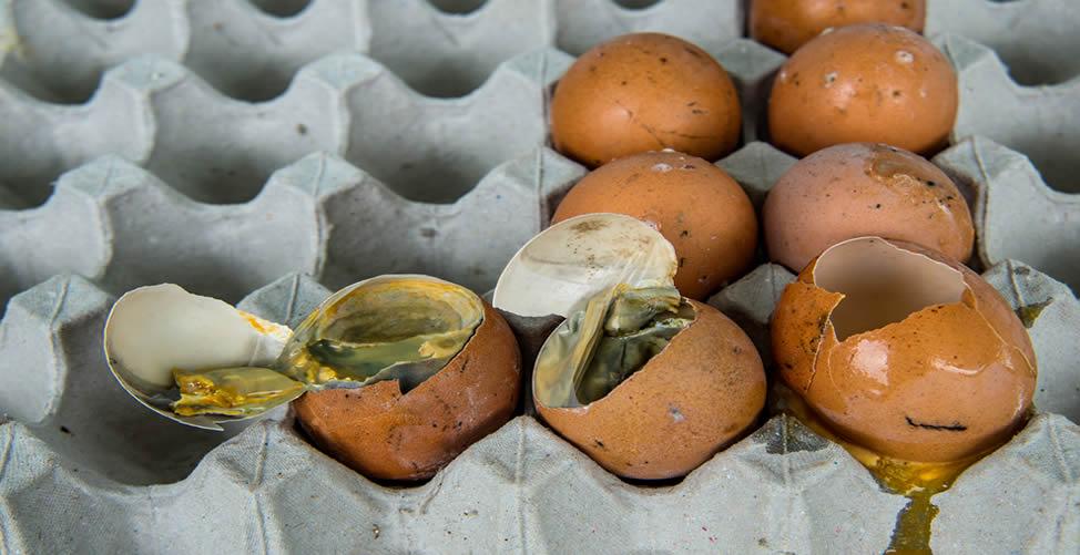 Sonhar Com Ovo Podre - Muitos