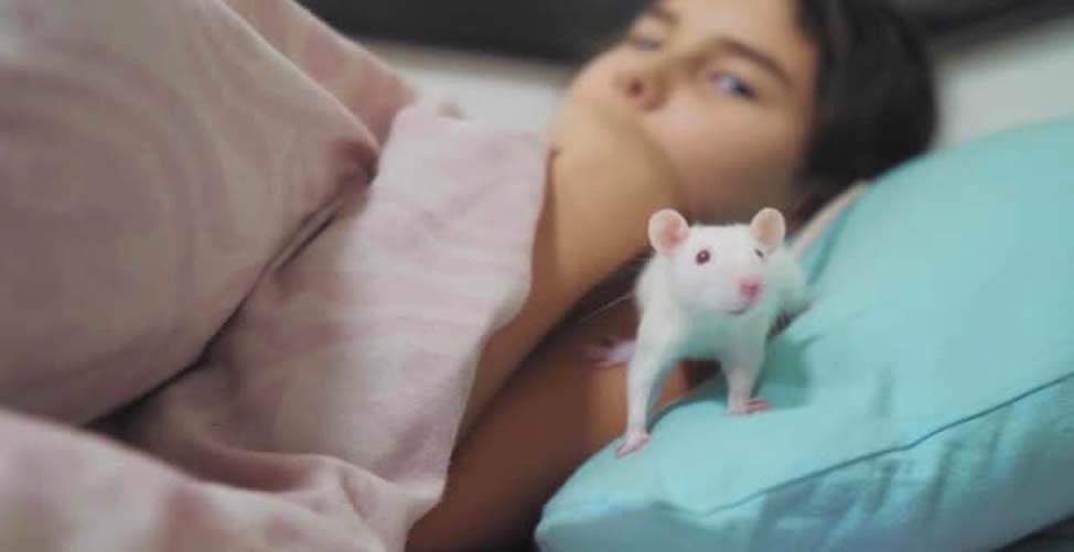Sonhar Com Rato Branco na Cama