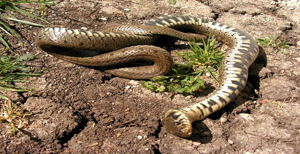 Sonhar Com Serpente Morta