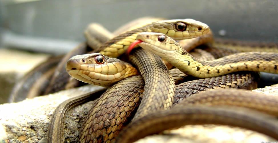 Sonhar Com Serpente - Muitas
