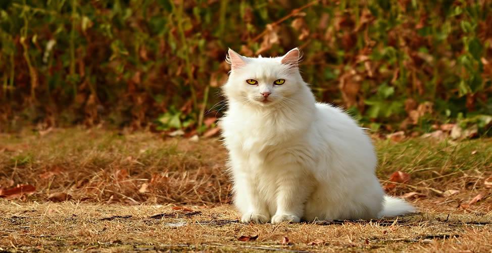 Significado de Sonhar Com Gato Branco