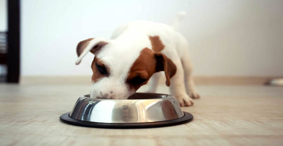 Sonhar Que Dá Comida Para Um Filhote De Cachorro
