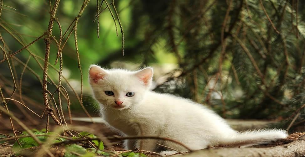 Sonhar Com Gato Branco Filhote
