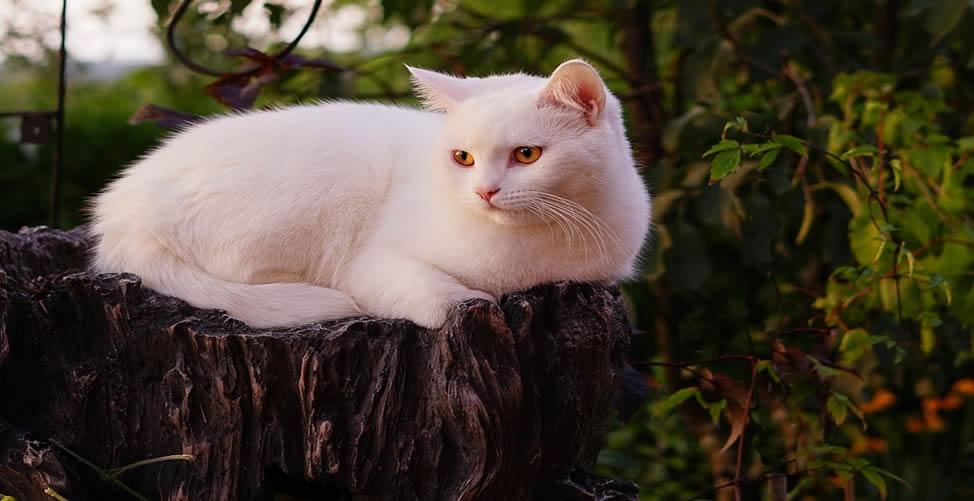 Sonhar Com Gato Branco Manso
