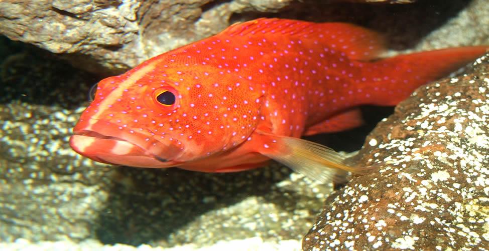 Sonhar Com Peixe Grande Vermelho