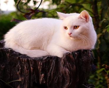 Sonhar-com-Gato-branco