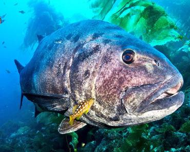 Sonhar-com-Peixe-Grande