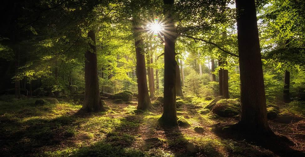 Sonhar Com Floresta