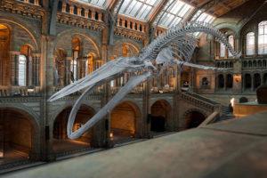 Sonhar Com Museu