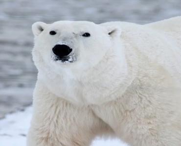 Sonhar Com Urso Branco